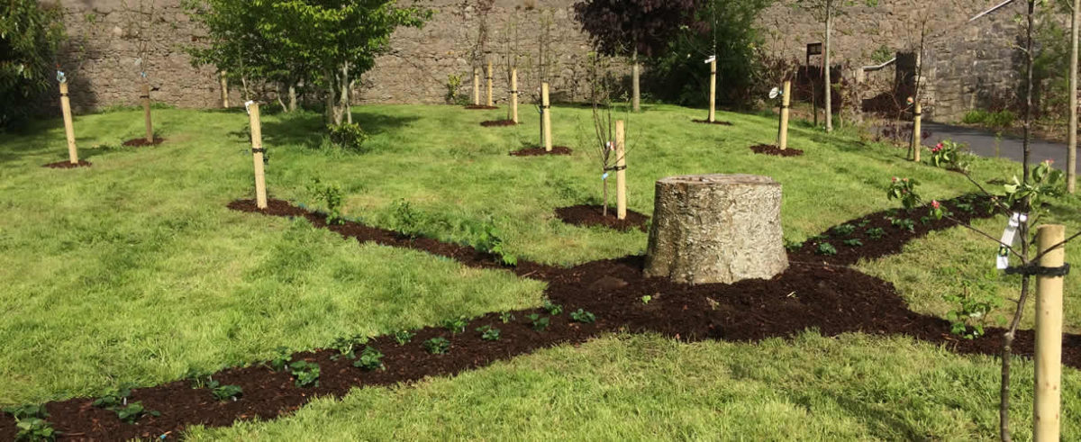 Commercial Landscaping Limerick